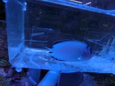 海水魚 700