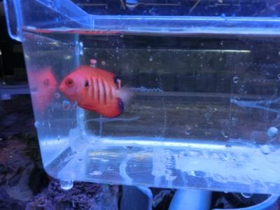 海水魚 701