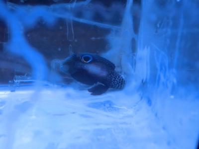 海水魚 704