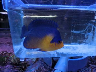 海水魚 705