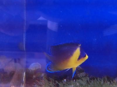海水魚 711