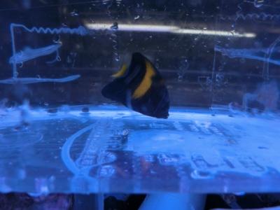 海水魚 707