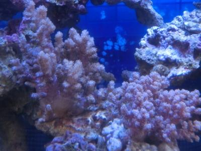 海水魚 714