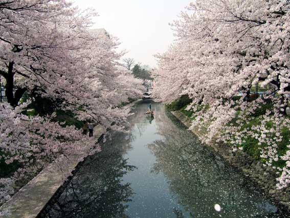 Matsukawa-no-sakura.jpg