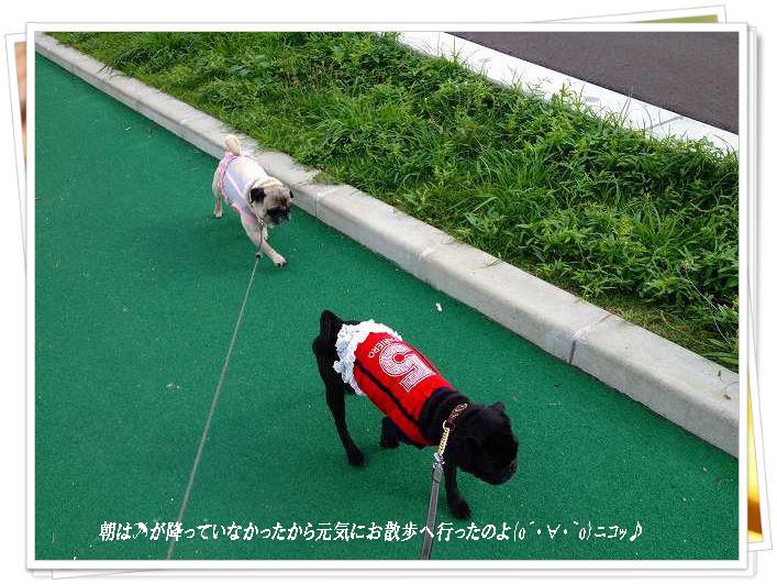 円お散歩へ