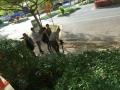 Video撮影2 アロマスクール マッサージスクール オーストラリア