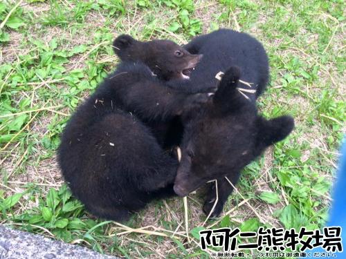 阿仁熊牧場 子熊 体重