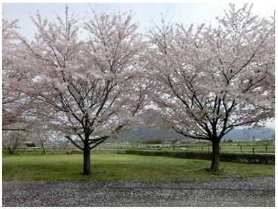 飯野山を見る風景2