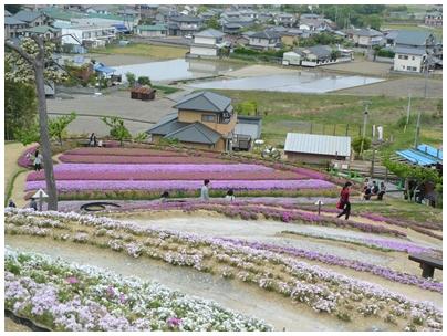芝桜富士3