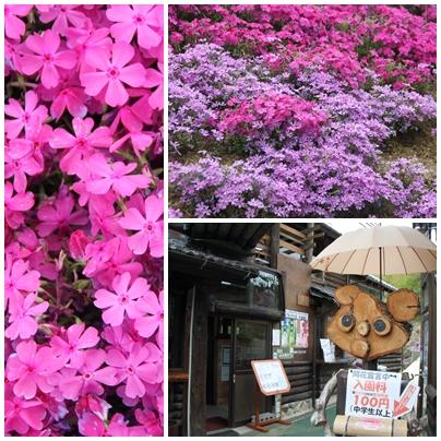 E芝桜富士2