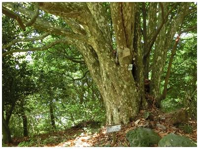 猫山2(木)