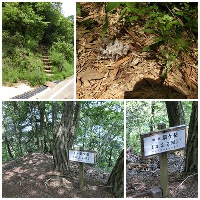 大高見峰登り口と讃岐駒ヶ岳