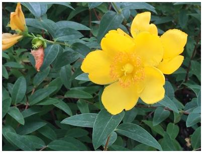 街に咲く黄色い花