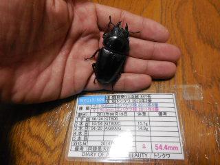 ♀544 トシクワ様 NYG13-506 (種親♂780×♀502)
