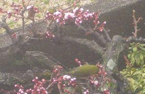 春の兆し1