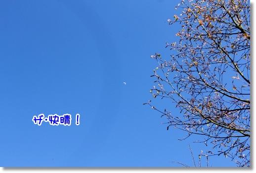 IMG_8863.jpg