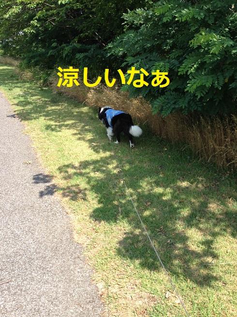 IMG_0715.jpg