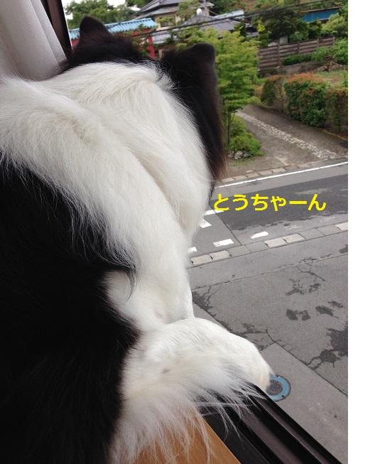 IMG_0894.jpg