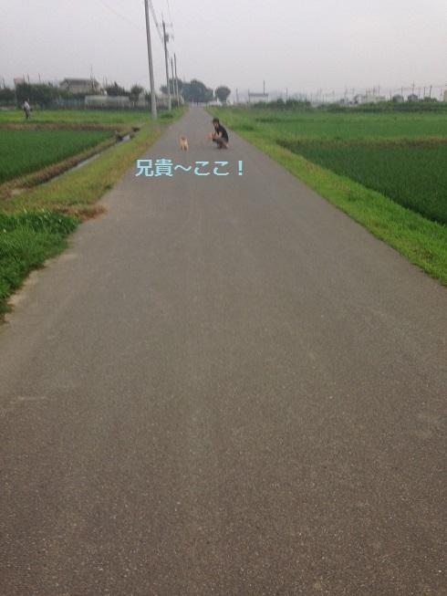 IMG_1206.jpg