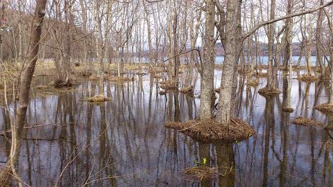 和琴+湿地_convert_20150331174238