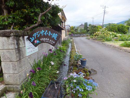4山アジサイ小苑1