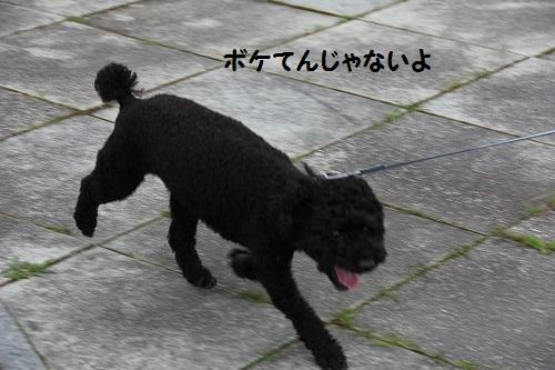 IMG_87402.jpg