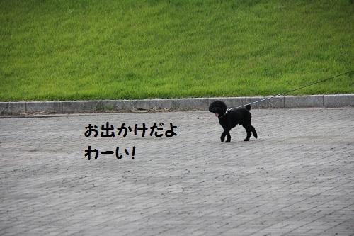 IMG_87452.jpg