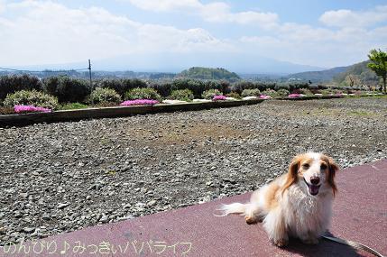 fujigoko201504006.jpg