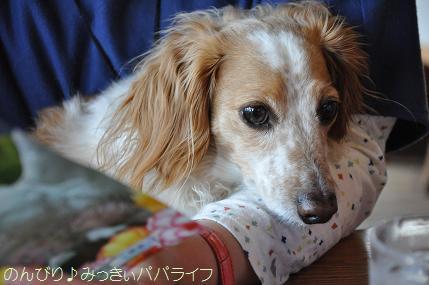fujigoko201504018.jpg