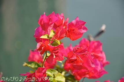 kaohsiung033.jpg