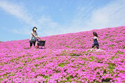 tateyama201505076.jpg