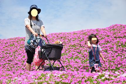 tateyama201505077.jpg
