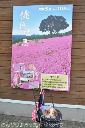tateyama201505078.jpg
