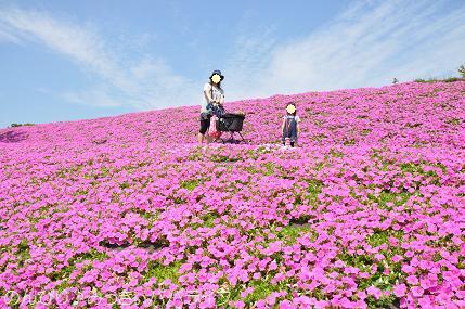 tateyama201505081.jpg