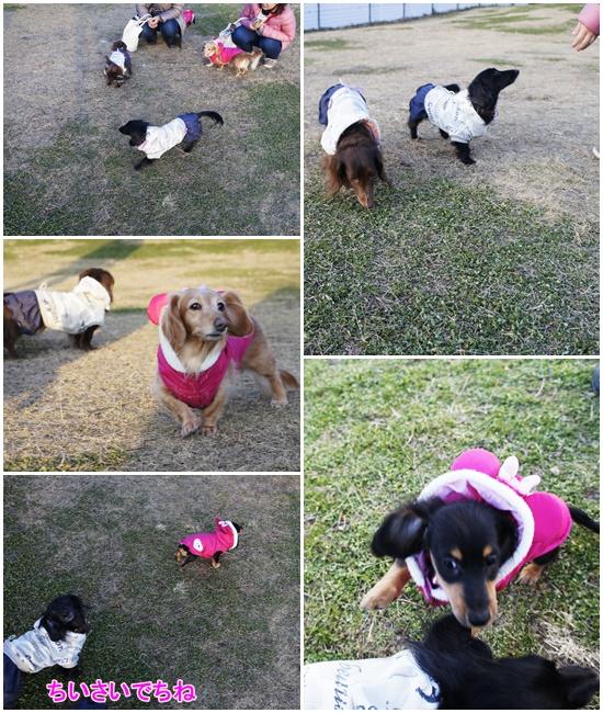 20141221名犬牧場1