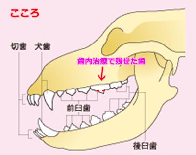 img01i犬の歯12こころ