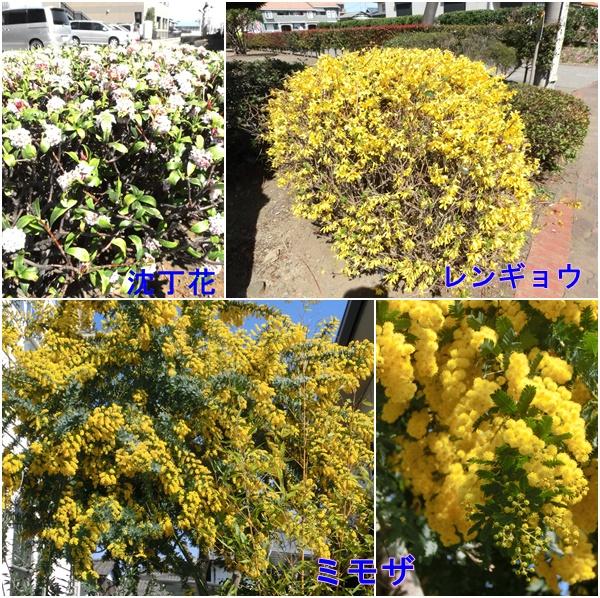 20150325春の花2