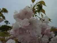 20140422人麻呂神社と公園 (9)