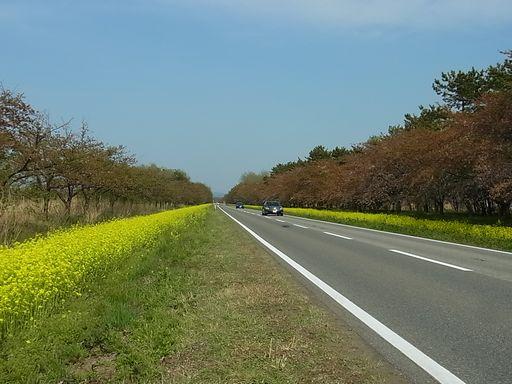 20140504大潟村 (29)