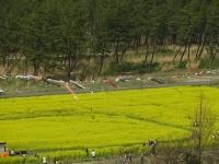 20140504大潟村 (14)