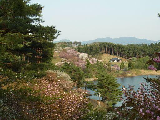 20140504日本国花苑 (20)