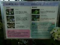 20140614みかさ公園 (20)