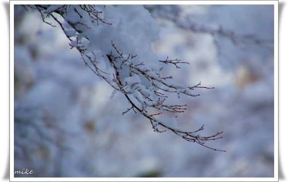 雪501031