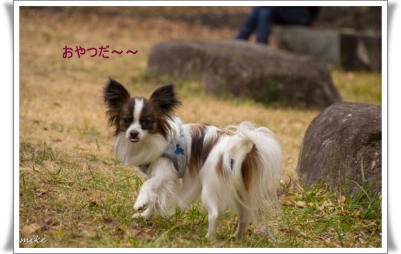 山田池502015