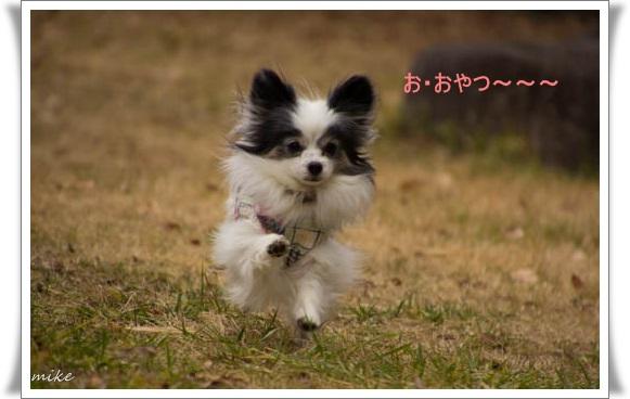 山田池502013