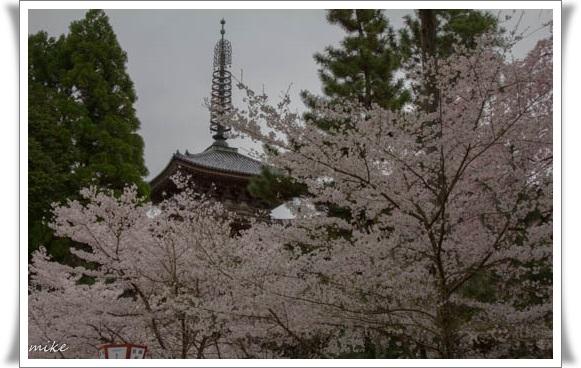 醍醐寺504033