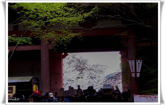 醍醐寺504032