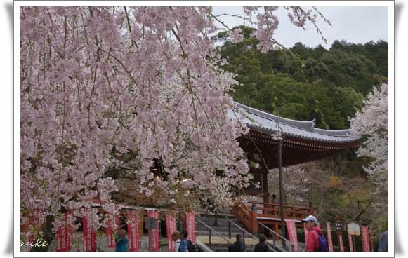 醍醐寺5040412