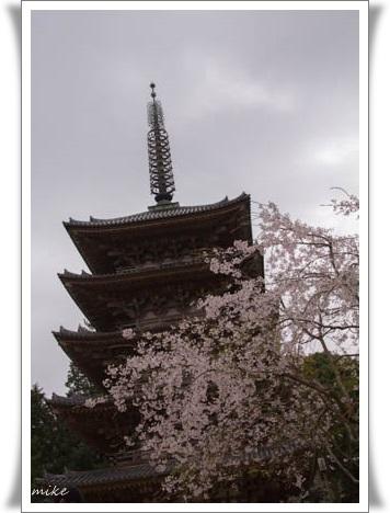 醍醐寺5040411