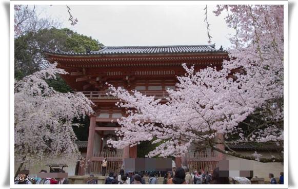 醍醐寺504049